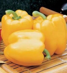 Pepper Bell Early Summer Yellow
