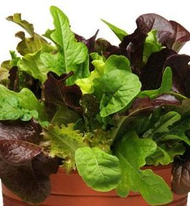 Simply Salad City Gardens Mix