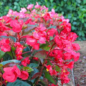 Spring-Summer Annuals