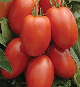 Tomato Roma