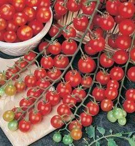 Tomato Super Sweet 100